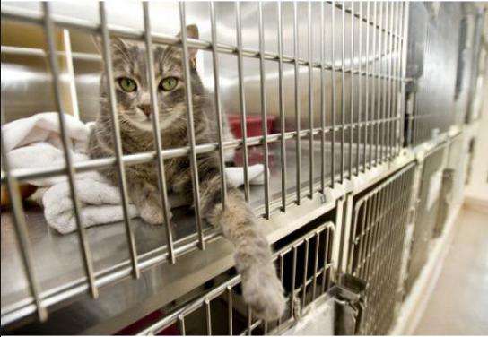 cat_shelter_insteadof_funeral